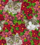 Cats in Pointsettias