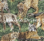 End of Bolt Piece - American Wildlife - Bobcats - 33