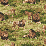 End of Bolt Piece - Born Free - Lions - 18