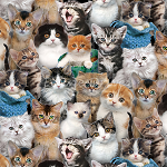 End of Bolt Piece - Cat Breeds - Packed Kittens - 22