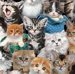 Cat Breeds - Packed Kittens
