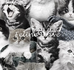 Fat Quarter - Cat Breeds - Packed Kittens - Grey