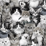 Cat Breeds - Packed Kittens - Grey