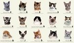 Cat Breeds - Panel