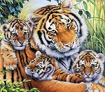 Animal Pride - Lily's Pride - Tiger Panel - Digital Print