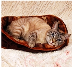 Pattern - Cat Napper - Small Pet Bed