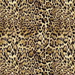 Return to the Wild - Leopard Skin