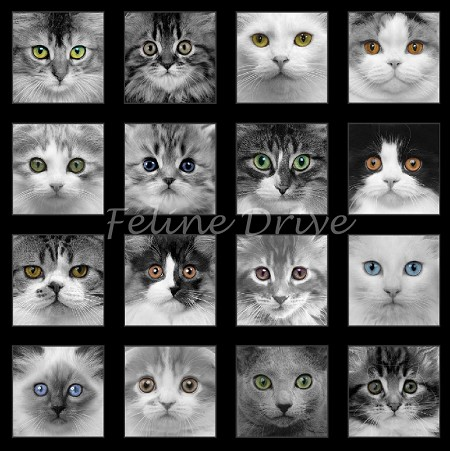 Adorable Pets - Panel - Black